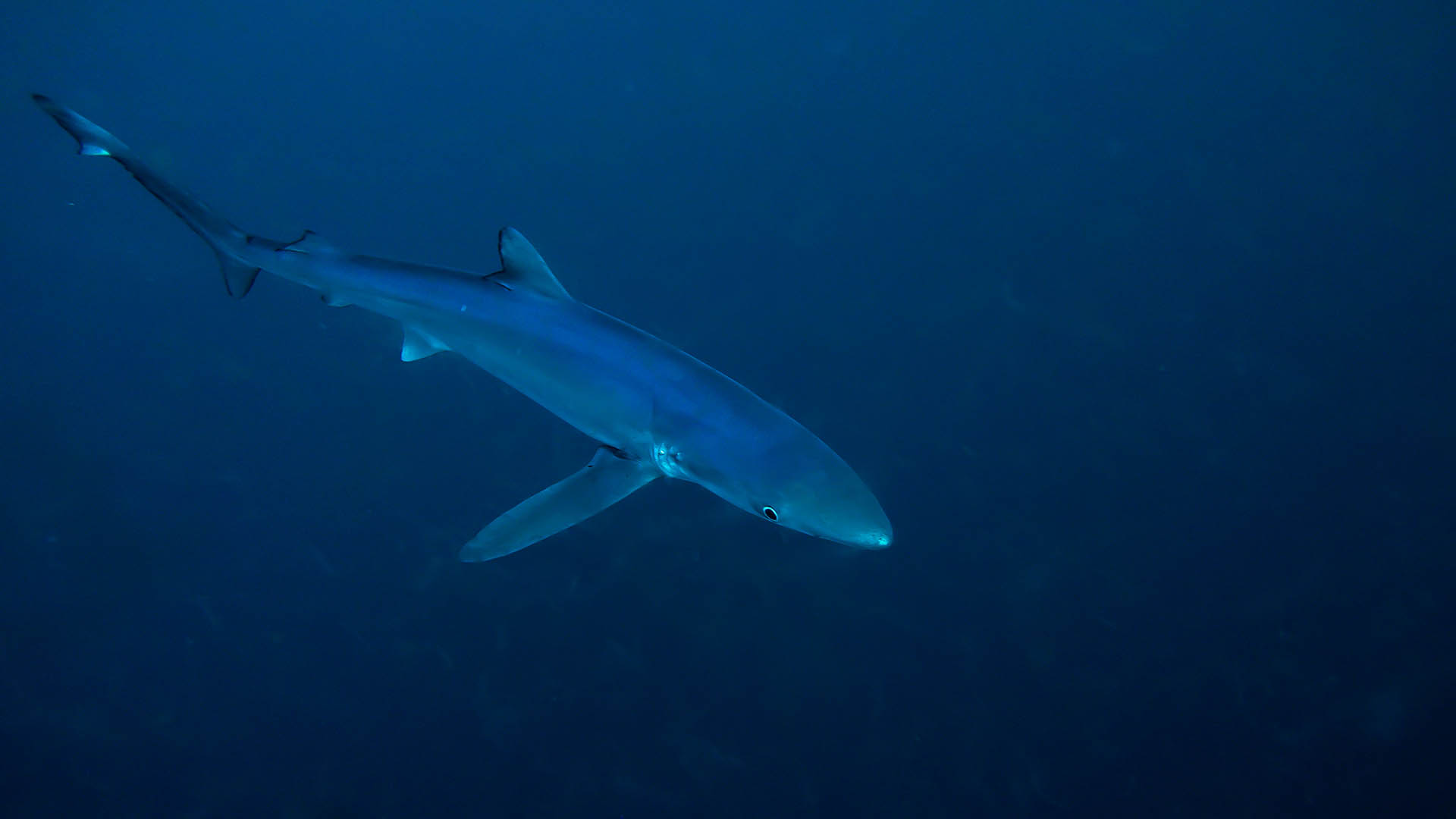 South African Shark Conservancy - More Than Just Sharks